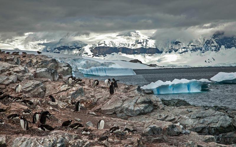 Antarktika dünyanın en soğuk ülkesidir.