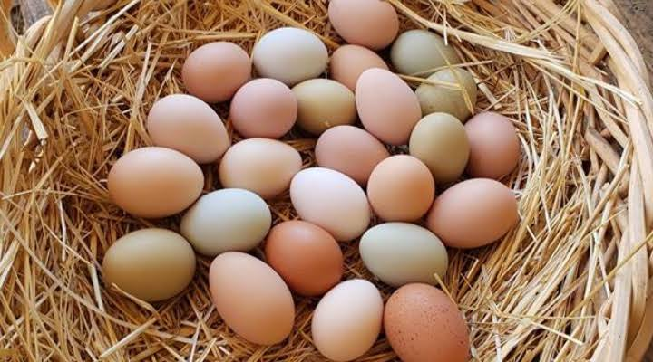 eggs to diet