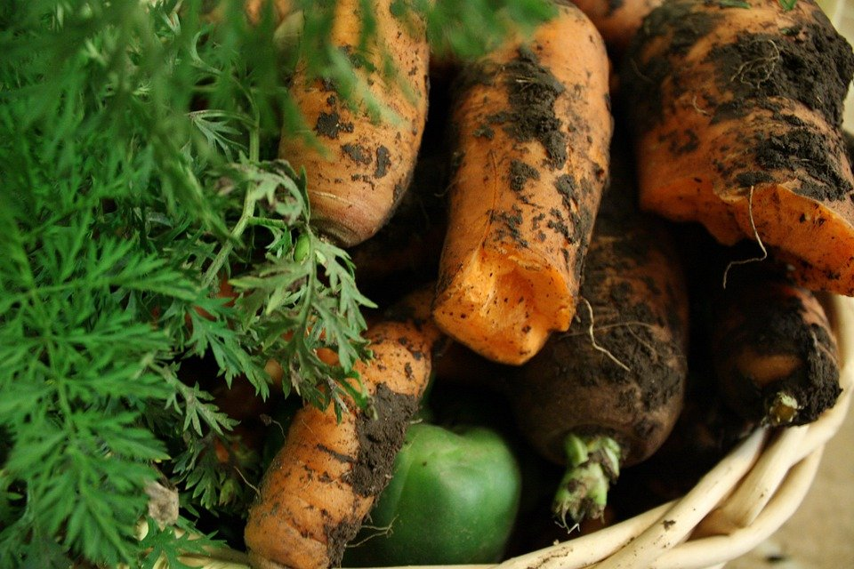 Dirty Vegetables And Fruits